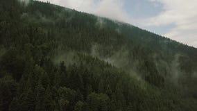 Volo mistico e nebbioso del fuco sopra la foresta pluviale in montagna Vista vicina archivi video