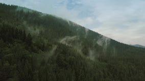 Volo mistico e nebbioso del fuco sopra la foresta pluviale in montagna Vista vicina statico stock footage