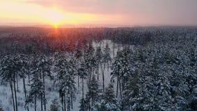 Volo nordico aereo del paesaggio di inverno sopra la foresta della montagna della neve sul tramonto video d archivio