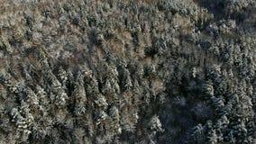 Volo nordico aereo del paesaggio di inverno sopra la foresta della montagna della neve sul tramonto stock footage