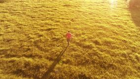 Volo sopra funzionamento sportivo dell'uomo al prato rurale perfetto dell'erba verde fuori strada Tramonto in montagna video d archivio