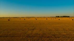 Volo sopra il campo dopo il raccolto per l'inverno per il bestiame video d archivio