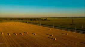Volo sopra il campo dopo il raccolto per l'inverno per il bestiame stock footage