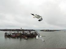Volo sopra il mare Gabbiani dell'isola vento Immagine Stock