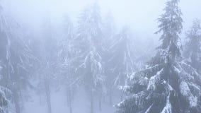 Volo sopra la bufera di neve in una foresta di conifere nevosa della montagna, tempo poco amichevole scomodo di inverno video d archivio