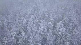 Volo sopra la bufera di neve in una foresta di conifere nevosa della montagna, tempo poco amichevole scomodo di inverno stock footage