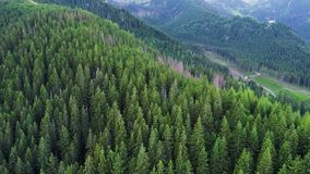 Volo sopra la foresta in montagne stock footage