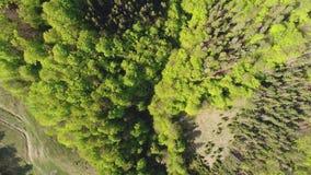 Volo sopra la foresta nelle montagne Vista aerea di ucranino Carpathians stock footage