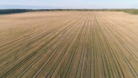 Volo sopra la molla in anticipo del campo giallo, foto aerea di vista panoramica Fotografie Stock