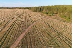 Volo sopra la molla in anticipo del campo giallo, foto aerea di vista panoramica Fotografia Stock