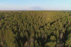 Volo sopra la molla in anticipo della foresta verde, foto aerea di vista panoramica Fotografie Stock Libere da Diritti