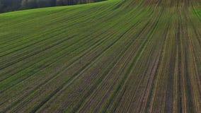 Volo sopra le colline verdi ed i campi al tramonto, vista aerea stock footage