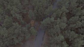 Volo sopra un Forest Park, i pini, il volo sopra le cime d'albero e una strada, viaggio, parco della molla del rilevamento aereo, archivi video