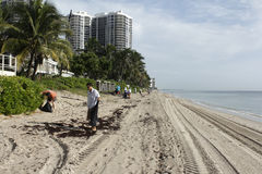 Volontärer som gör upp ren på den kust- rengöringen Fotografering för Bildbyråer