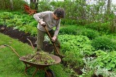 Volontärkvinnaträdgårdsmästare som gräver i blomsterrabatt Royaltyfri Bild