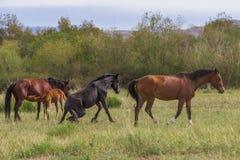 Volontés de groupe frôlant et jouant des chevaux images libres de droits