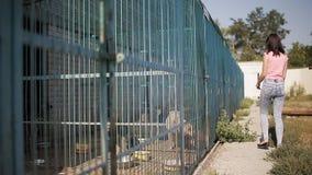 Volontaire de fille dans la crèche pour des chiens Abri pour les crabots parasites banque de vidéos