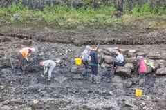 Volontari archeologici Fotografie Stock