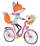 Volpe sveglia sulla bicicletta con i fiori illustrazione di stock
