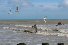 Vols de Seaaquals Photos libres de droits