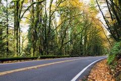 Volta na estrada na floresta do outono com folhas caídas Imagem de Stock