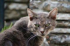 Voltas irritadas do gato Foto de Stock Royalty Free