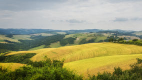 Voltera Tuscany Italy View From Above. Voltera Tuscany Landscape June Tree Fields of Gold stock image