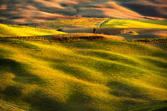 Volterra panorama, rolling hills, fields, meadow and lonely tree Stock Image