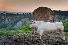 Volterra Tuscany, Italien - Volterra medeltida stad, de scultorMauro Staccioli arbetena som installeras i 2009 för utställning Royaltyfri Foto