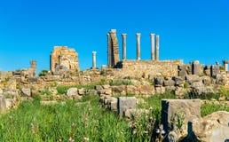 Volubilis、一个巴巴里人和罗马城市废墟在摩洛哥 库存照片