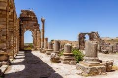 Volubilis站点在摩洛哥 库存照片