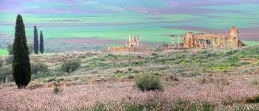 Volubilis в Marocco стоковые изображения