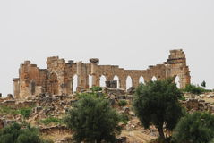 Volubilis Photo stock