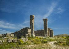 Volubilis royalty free stock photography