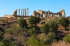Volubilis Stock Images