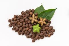 Volubilis de Plukenetia, arachide de sacha, ou inchi de sacha (frais, sec et graines) sur le fond blanc Images libres de droits