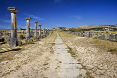 Volubilis - the Decumanus Maximus street Stock Images
