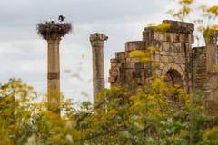 Volubilis est un Amazigh ruiné, puis ville romaine au Maroc près de Mekne Photographie stock