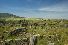 Volubilis landscape stock images