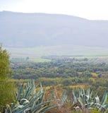 volubilis in Marokko Afrika die alte Agave und der Standort Lizenzfreies Stockfoto
