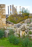 Volubilis in morocco africa the  deteriorated monument and site Royalty Free Stock Photos