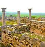 Volubilis in morocco africa the old roman deteriorated monument Royalty Free Stock Photo