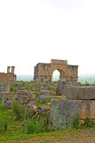 Volubilis in morocco africa the old roman deteriorated monument Royalty Free Stock Photos