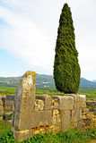 Volubilis in morocco cypress  roman deteriorated monument Stock Photo