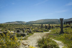 Volubilis in Morocco Royalty Free Stock Photos