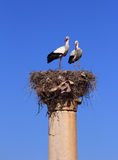 Volubilis - Roman archaeological site, Morocco. Morocco, Moulay Idriss, Volubilis - Roman archaeological site, couple of storks nesting on a column. UNESCO World royalty free stock images