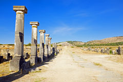 Volubilis - Roman basilica ruins in Morocco, North Africa Stock Images