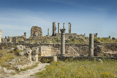 Volubilis ruins Stock Photography