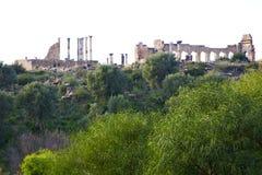 volubilis w Morocco Africa stary rzymski krzak Obraz Royalty Free