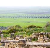 Volubilis w Morocco Africa stary rzymski marniejący zabytek Fotografia Royalty Free